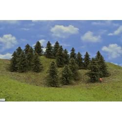 39B1TT-Bäume,Kiefern,Höhe 8-9cm,20 Stück