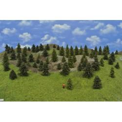 LES TT17 , smrky,borovice,4-8 cm ( TT17)