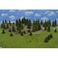 Forest TT18 - Spruces, pines, height 3-10 cm, 50pcs