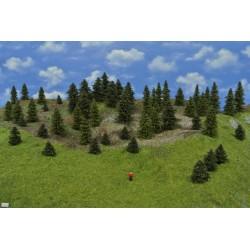 Wald TT18, Fichten, Kiefern, 3-10cm, 50 Stück