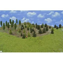 Wald TT20, Kiefern, Lärchen, Laubbäume, 3-9cm,50 Stück