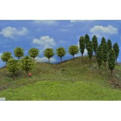 Forest TT31 - deciduous, height 6-10 cm, 18pcs
