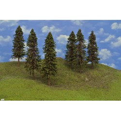 20S3HO - Spruces, 24-27cm, 6pcs