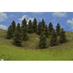 40B1HO - Pines, height 9-11cm, 16pcs