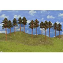 43B2HO - Pines, height 18-20cm, 12pcs