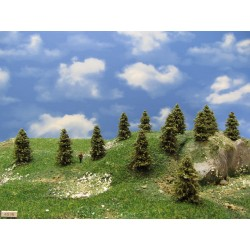 3S1N - Spruces, height 4-5cm, 30pcs