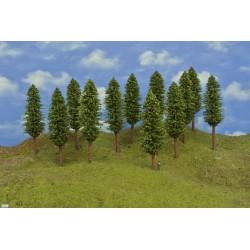 53Z2HO - deciduous trees, height 17-18cm, 12pcs