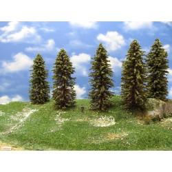 12S2HO-stromky,smrky,výška 15-18cm,9ks