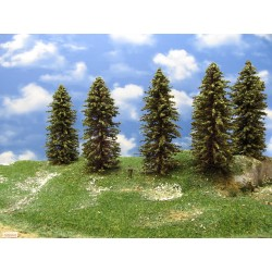 12S2HO - Spruces, height 15-18cm, 9pcs