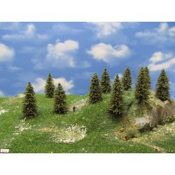5S1N - Spruces, height 5-8 cm, 30pcs