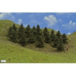 38B1TT-Bäume,Kiefern,Höhe 5-6cm,20 Stück