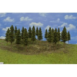 7S2N - Spruces, height 12-14 cm, 20pcs