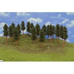 42B1TT - Pines, height 15-17cm, 20pcs