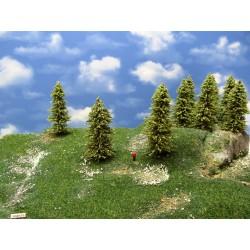 33MZ1TT-stromy,modříny 10 -13cm,20ks
