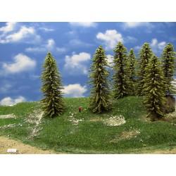 34MZ1TT-stromy,modříny 16-18cm,12ks