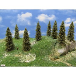 6S2N - Spruces, height 9-11cm, 20pcs