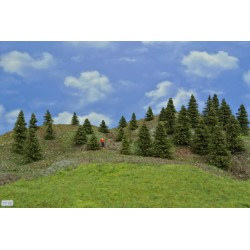Forest TT23 - Spruces, height 3-8 cm, 30pcs