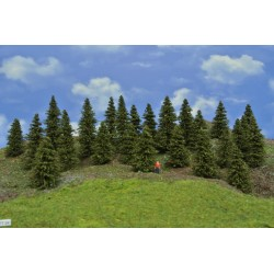 Forest TT24 - Spruces, height 5-10 cm, 25pcs