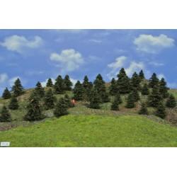 Forest TT25 - Pines, height 3-6 cm, 35pcs