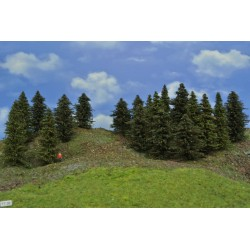 Forest TT26 - Spruces, pines, height 8-10 cm, 20pcs
