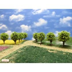 55Z1N - Deciduous trees, height 6-7cm, 16pcs