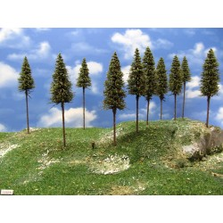 15S2N - Spruces, height 15-17cm, 20pcs