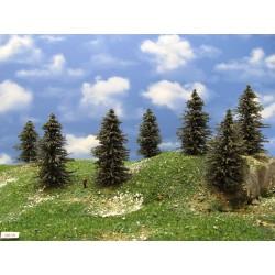 39B1N - Pines, height 8-10 cm, 20pcs