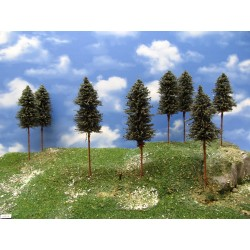 42B1N - Pines, height 15-17 cm, 20pcs