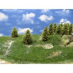 30MZ1N-Lärchen grün,Höhe 6-9cm,20 Stück
