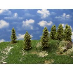 33MZ1N-Lärchen grün,Höhe 10-13cm,20 Stück
