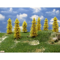 33M1N-Lärchen gelb,Höhe 10-13cm,20 Stück