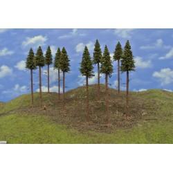 17S2KTT-Fichten mit Wurzeln und trockenen Zweigen auf Baumstämmen,17-20cm,10St