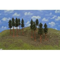 42B1KTT-Kiefern mit Wurzeln und trockenen Zweigen auf Baumstämmen,14-17cm,10St