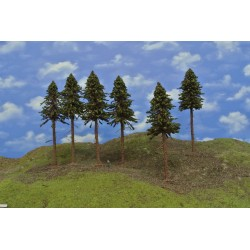 19/S3K/HO-Fichten mit Wurzeln und trockenen Zweigen auf Baumstämmen,21-23cm,6St
