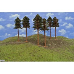 43B2KHO - Pines with roots, height 18-20cm, 6pcs