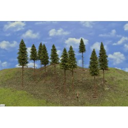 15/S2K/N - Spruces with roots, height 14-16cm, 10pcs