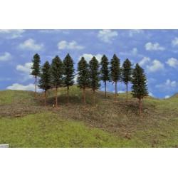 42B1KN - Kiefern mit Wurzeln und trockenen Zweigen auf Baumstämme
