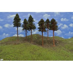 Forest HO40, Pines and spruces with roots, 18-23cm, 6 pcs