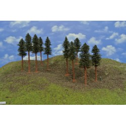 42B1KHO - Pines with roots, height 14-17cm, 10pcs