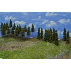 Wald N17, Fichten,12-19cm ,30Stück