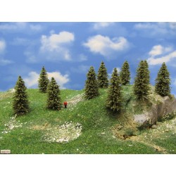 5S1TT - Spruces, height 5-8cm, 30pcs